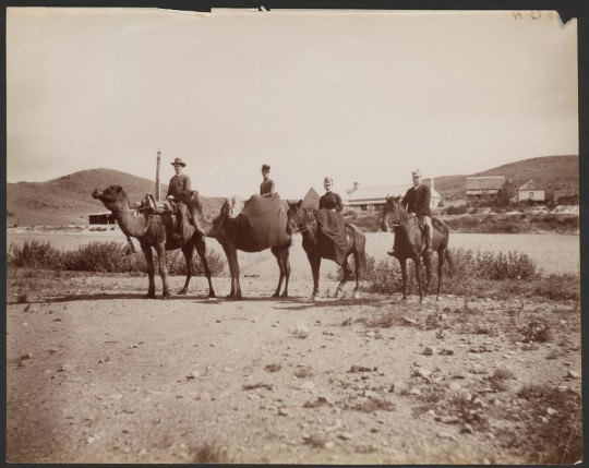 Camel Party at Peake, 1889 [B25183]