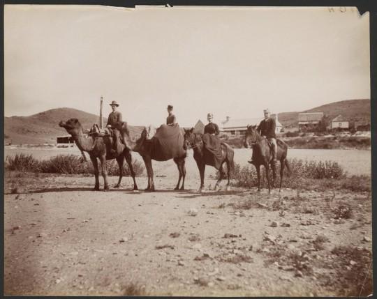 Camel Party at Peake, 1889 [B25183]