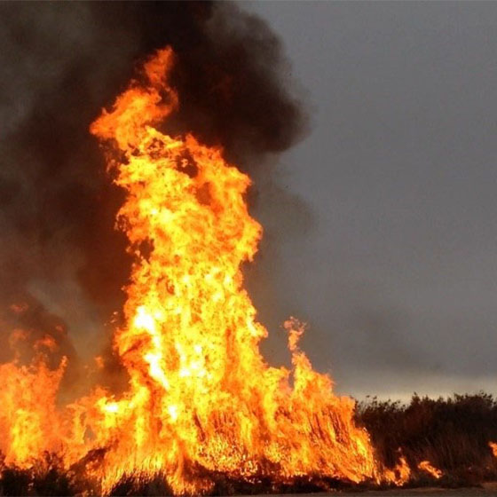 Trial Spring Burns conducted on Finniss Springs